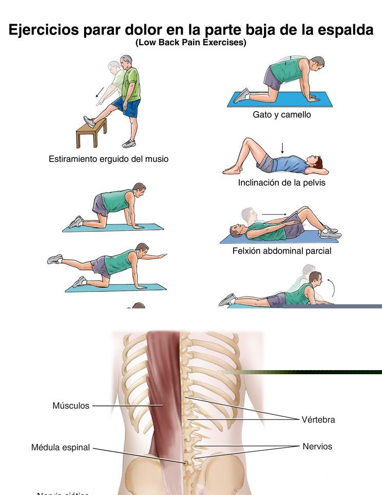 Ejercicios para el Dolor en la Parte Baja de la Espalda